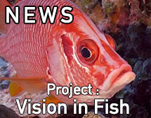 FishVision_Annonce_May2019_EN
