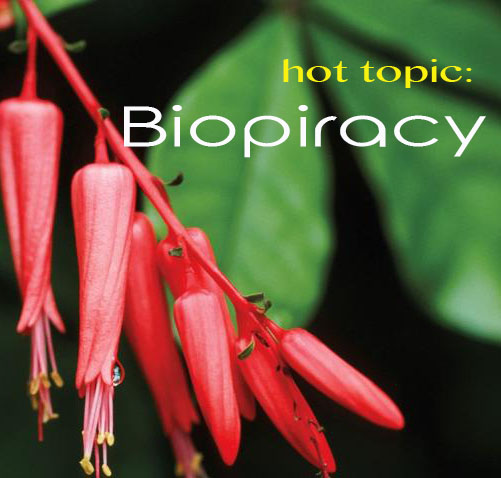 Hot topic: Biopiracy