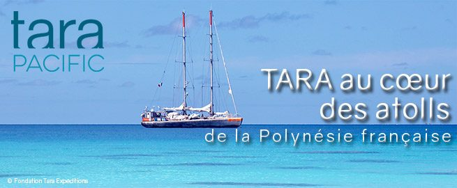 http://www.criobe.pf/wp-content/uploads/2016/04/french-polynesia_PressReleaseV3-655x270.jpg