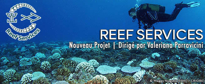 REEF SERVICES_NewProject