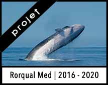 RorqualMed_Annonce_Project_2020
