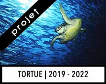TORTUE_Annonce_Project_2020v2